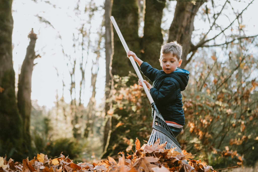 Boy rakes up a pile of maple leaves.