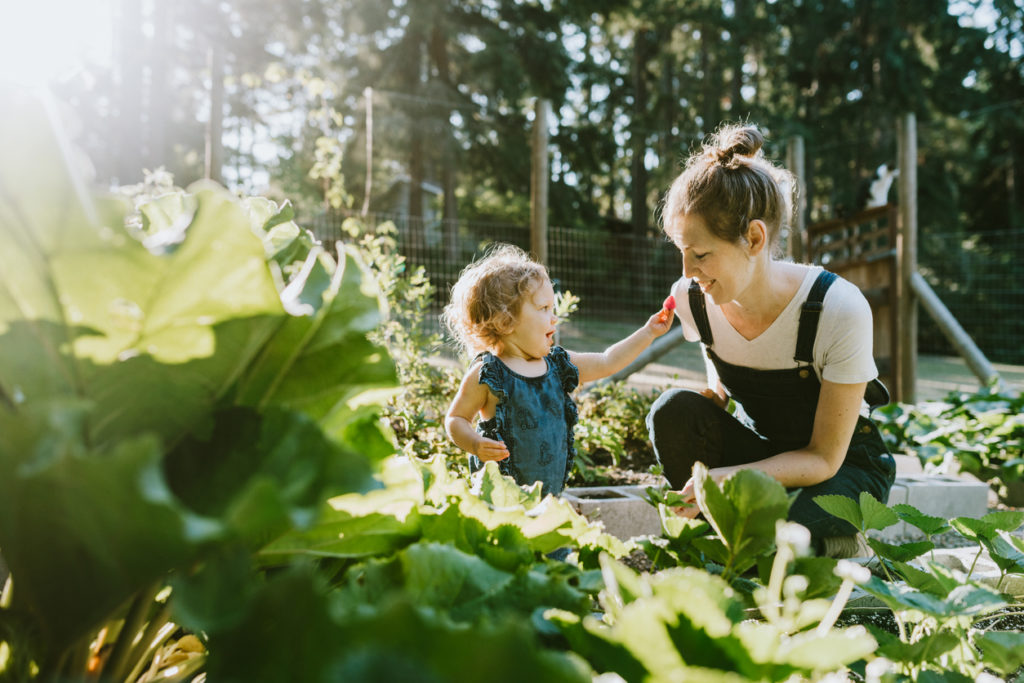 A mother and her baby daughter pick fresh strawberries from their garden on a warm late summer morning at their home.