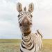 See Exotic Animals At The Natural Bridge Wildlife Ranch