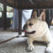 Check Out These 3 Dog Friendly Restaurants In San Antonio