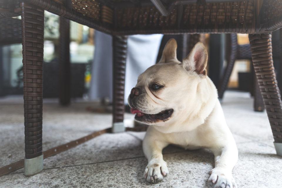 dog under chair at pet-friendly restaurant